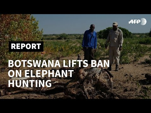 Fearful Of Elephant Attacks, Some In Botswana Cheer Hunting's Return | AFP