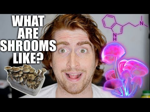 What's eating shrooms like? The magic mushrooms (psilocybin cubensis) psychedelic trip experience