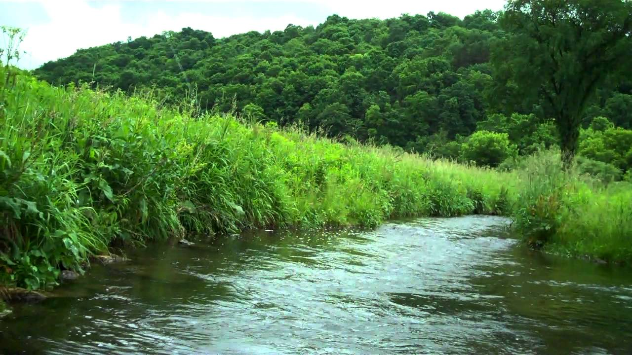 Fly fishing on a wisconsin spring creek in the driftless for Trout fishing mn