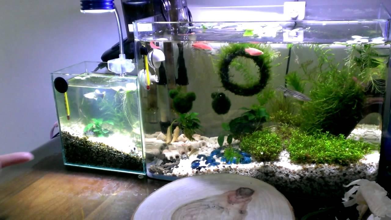 孔雀魚魚缸家庭造景 - YouTube