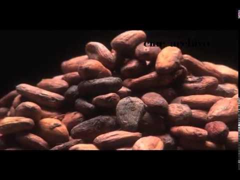 #Documental - Cacao Fino y su épica en Venezuela