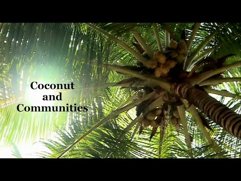 Coconut and communities