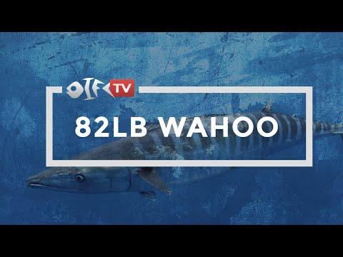 Epic Wahoo Fishing