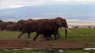 Deadly African Elephant The world's largest land animal