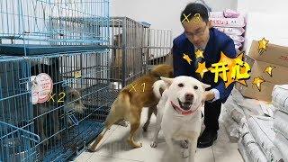 寄养三天的中华田园犬,终于等来主人,场面激动人心一度陷入混乱