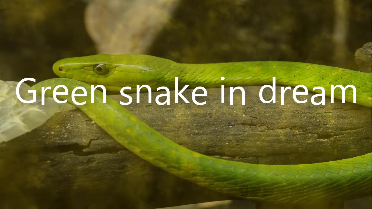Green snake in dream dreams meaning and interpretation youtube green snake in dream dreams meaning and interpretation biocorpaavc Image collections