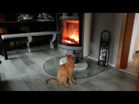 Cat prays to the god of warm fire