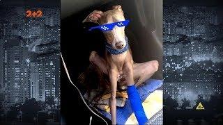 У Києві викрали Range Rover разом з собакою - собаку віддали, а авто - ні