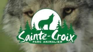 Comment les loups de Sainte-Croix peuvent-ils aider à protéger du bétail ?