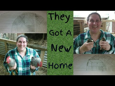 Building a Chicken and Quail Pen With a Trampoline