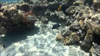snorkling off the beach sunwing water world makadi bay eygpt july 2012