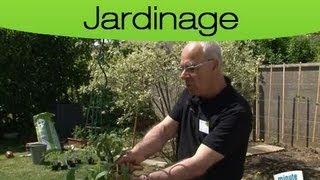 Comment planter et cultiver ses tomates ?
