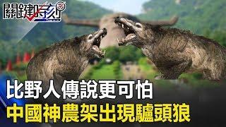 比野人傳說更可怕… 中國最神秘神農架出現尖牙厲爪吃人「驢頭狼」! 關鍵時刻20190722-3 劉燦榮