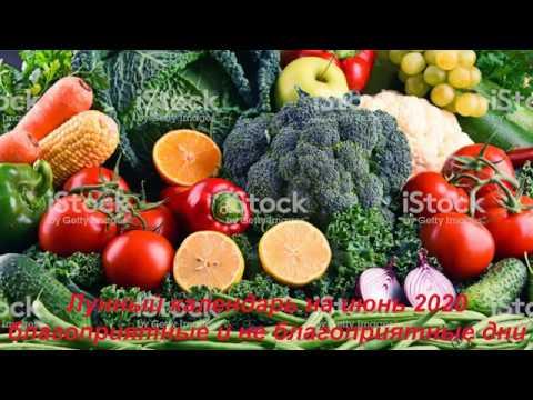 Лунный календарь на июнь 2020 приусадебное хозяйство.