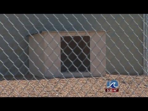 Pit Bull left outside Virginia Beach shelter overnight dies