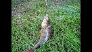Удачная ЛОВЛЯ ОКУНЯ на ЖИВЦА!!! Рыбалка на МЕДВЕЖЬЕМ озере!!!