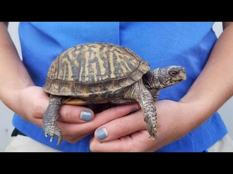 Pregnant Zookeeper Keeps Track Of Baby's Size Using Odd, But Cute Animals