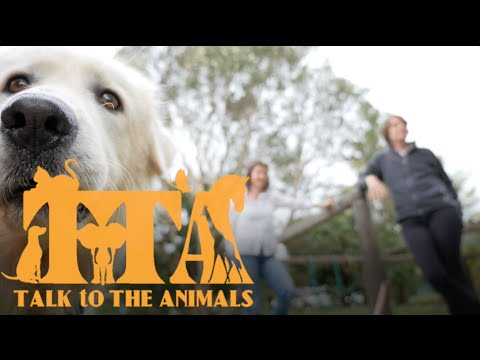 Talk To The Animals - What people say!