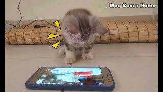 Funny Cats Playing On Phone | Funny Videos 2018