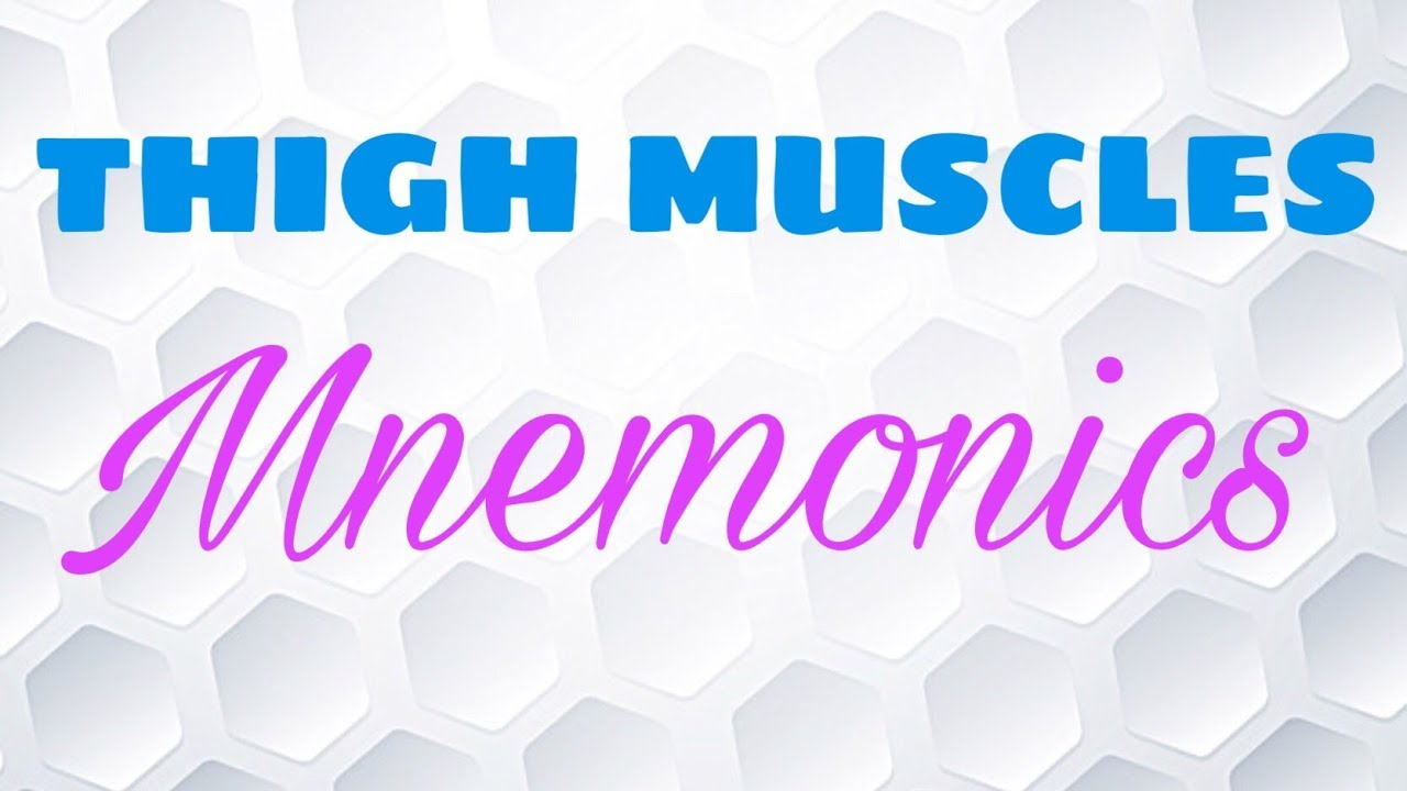 Mnemonics For Thigh Muscle Anatomy Youtube