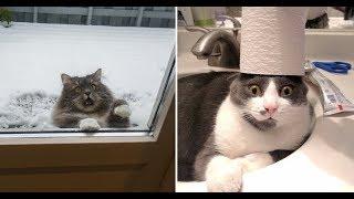 Смешные и Милые животные!   🐔 Любимые питомцы 🐧   Веселое видео