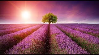"Peaceful Music, Relaxing Music, Instrumental Music ""In Quiet Fields..."