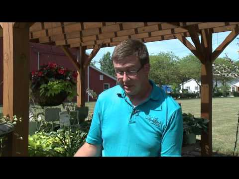 New Day Cleveland - Uncle John's Plant Farm - Hostas  8-10-2016