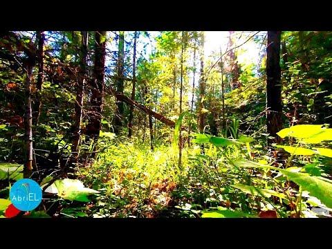 Prezentare   carte   MINUNATA CALATORIE A LUI NILS HOLGERSSON PRIN SUEDIA from YouTube · Duration:  2 minutes 1 seconds