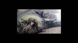 Как рисовать кота масляными красками