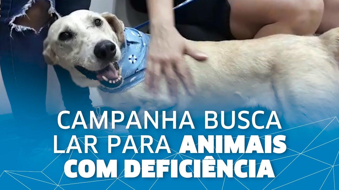 Campanha de adoção busca lar para animais com deficiência em São Leopoldo