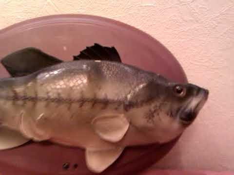 Fish, A Singing Fish
