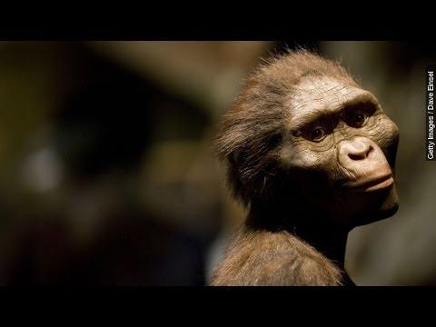 Google Doodle Celebrates Lucy The Australopithecus - Newsy