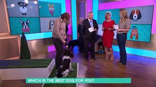 Which is the Best Dog for You?  English Springer Spaniel | This Morning