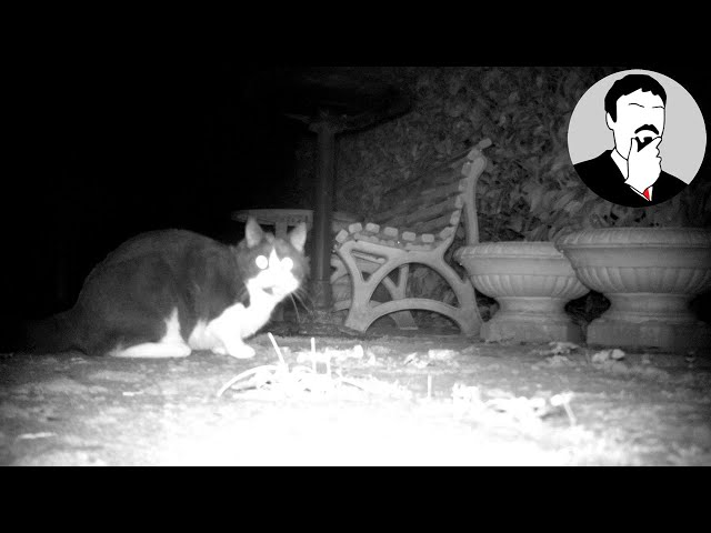 Neewer Trail Camera   Ashens