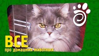 Коты И Стресс: Что Делать и Как Помочь.  Все О Домашних Животных