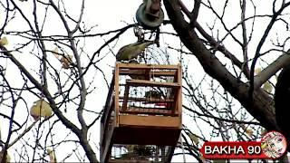 Ловля зеленушки. Таджикистан г. Канибадам  ( Зенушка )