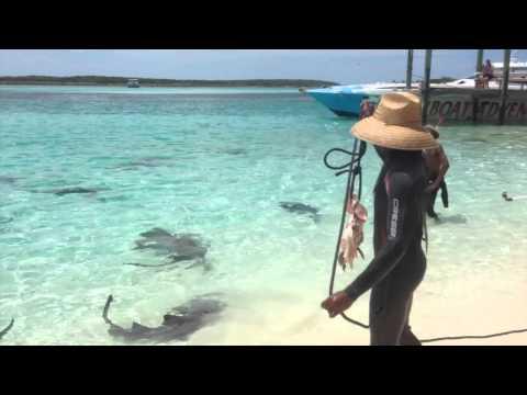 Shark Wrangling on the beach in the Bahamas
