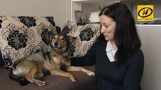 Вместо лап – колёса: собаки-инвалиды ищут дом и любящих хозяев