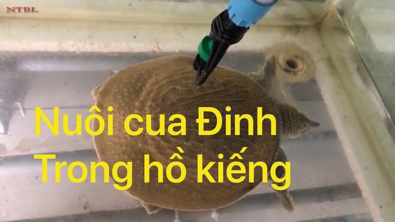 Nuôi cua Đinh công nghệ cao  |  Crab farming with high technology