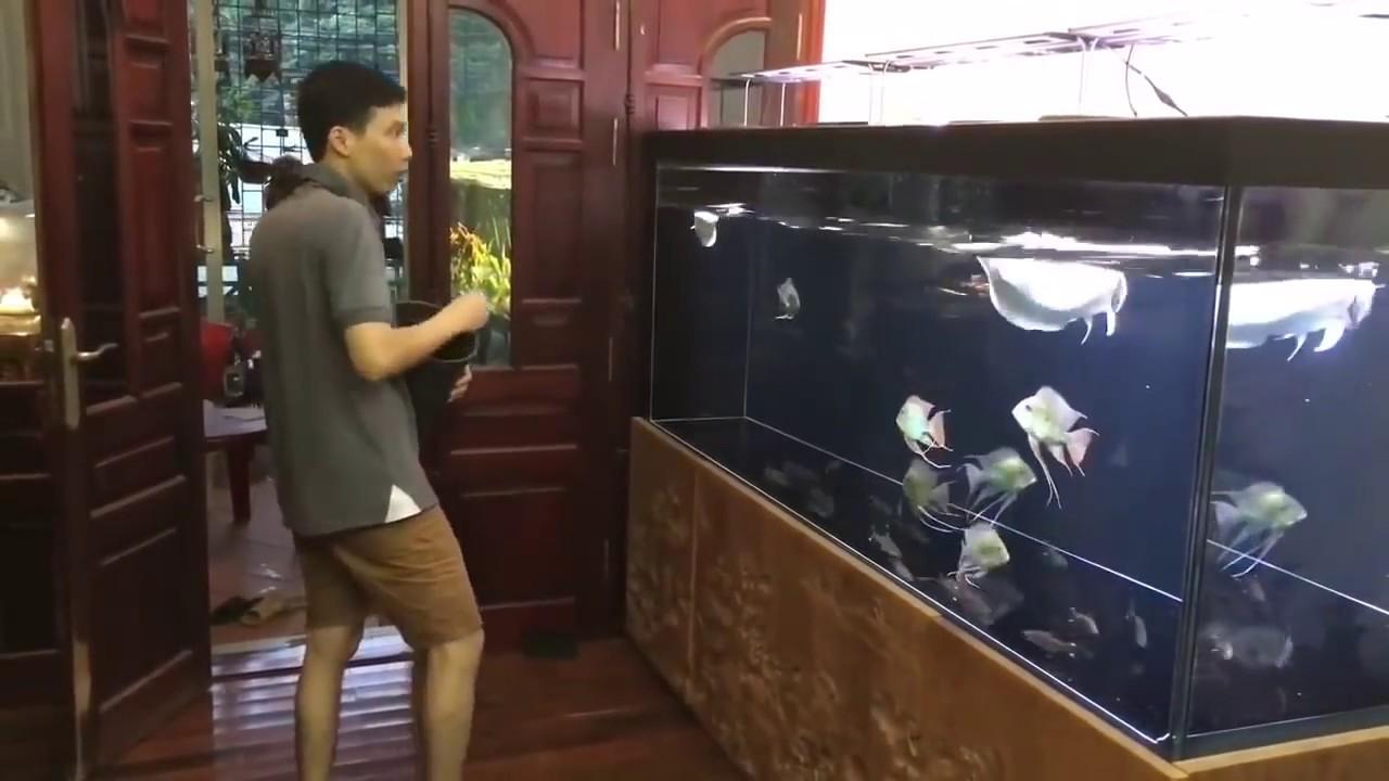 [HOT 2017] Dàn bể khủng cá rồng, thủy sinh của một đại gia Hà Nội