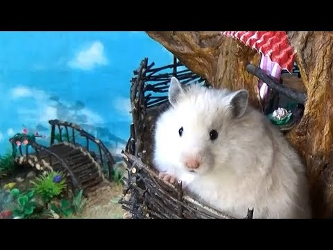 Hamster in the DIY Tree House