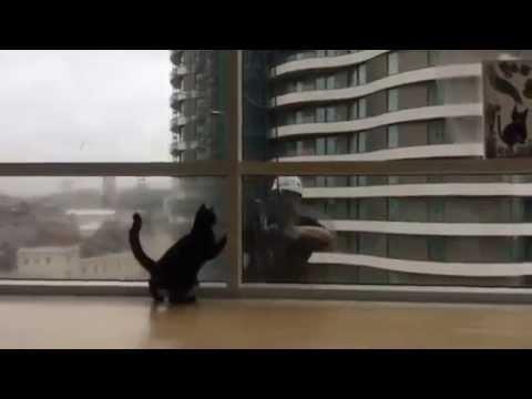 Cat vs. Window Washer
