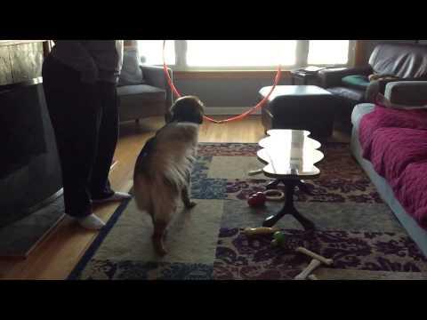 Maggie Circus Dog