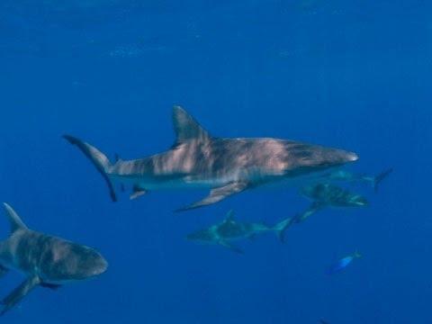 Marshall Islands: The World's Largest Shark Sanctuary