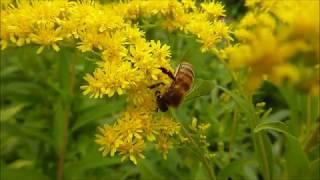 Gambar cover I Biocidi un furto alla natura