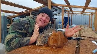 Кролики производители.Заготовка сена зимой.
