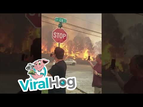 Brother Wease - Video:  Forest Fire in Florida Neighborhood Gets Close to People Filming