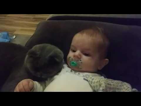 Cute Big love .... British cat & kids