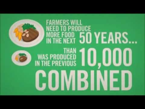 Feeding the world: GMO or not? (PBL Package)