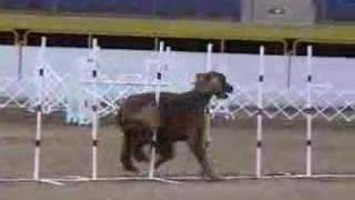Colorado Dog Show Agility With Carole Evans